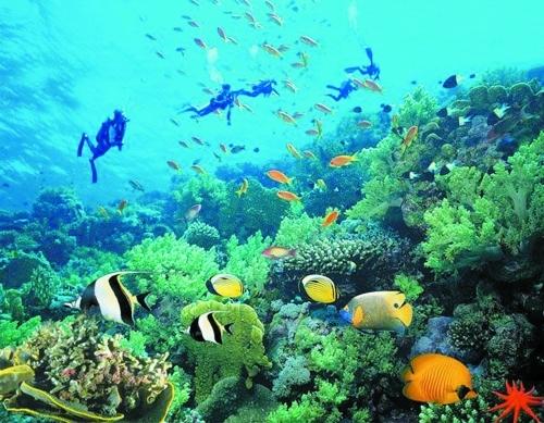 壁纸 海底 海底世界 海洋馆 水族馆 桌面 500_389