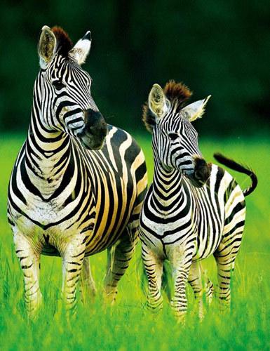 辗转在非洲日落大地 与动物零距离接触