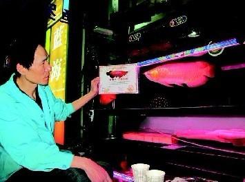 西安天价金龙鱼标价8.2万 每月食宿费超500元