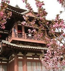 青龙寺看樱花