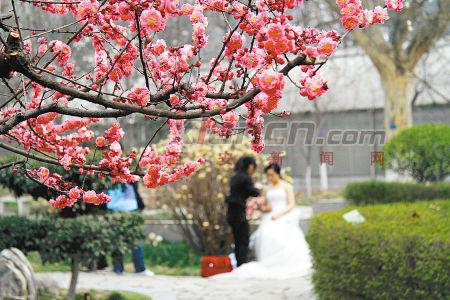 昨日阳光正好,西安植物园内花儿结香.记者张宇明 实习生左磊摄