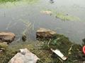 (巢湖用污浊河水做饮用水)