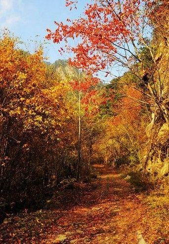 太白县黄柏塬乡地处秦岭南麓腹地,位于太白山西南脚,太白县