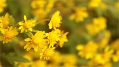 美丽的乡间小花