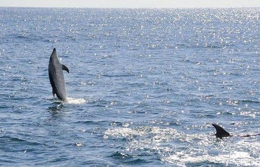 少年派的五种玩法 观海豚
