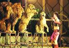 秦岭野生动物园欢乐无限