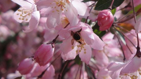 繁花似锦最春天 寻觅西安最适合春天游玩的地方
