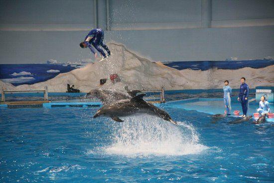 青岛极地海洋世界 海洋动物给你更多精彩