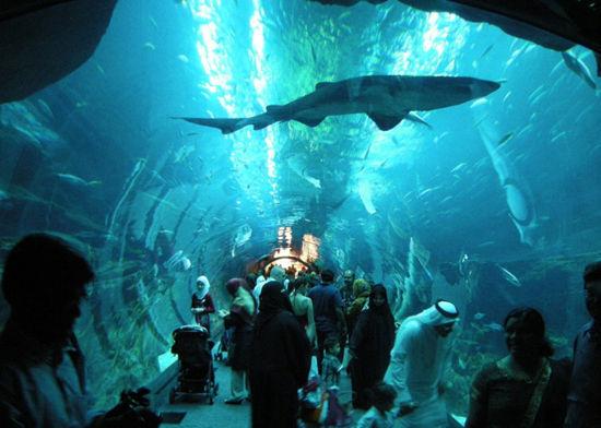 迪拜水族馆&水下动物园