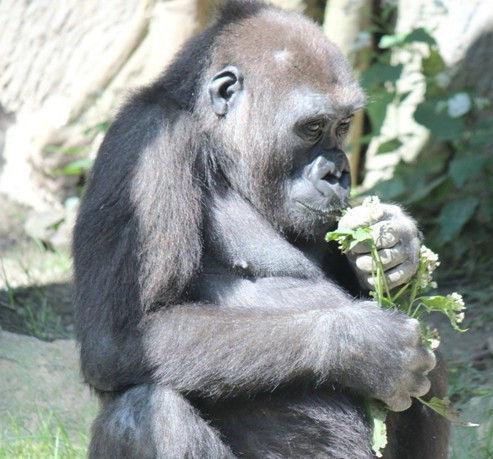 带孩子游历世界十大动物园