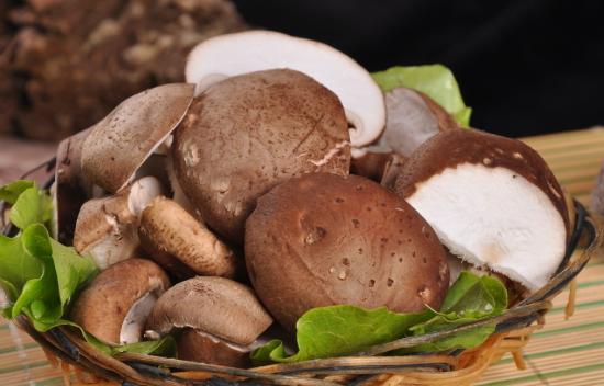 香菇含有一种分子量为100万的抗肿瘤成分香菇多糖,含有降低血脂的成分香菇太生,香菇腺嘌呤和腺嘌呤的衍生物,香菇还含有抗病毒的成分干扰素的诱发剂和双链核糖核酸,是不可多得的保健食品之一。香菇中含不饱和脂肪酸甚高,还含有大量的可转变为维生素D的麦角甾醇和菌甾醇,对于增强抗疾病和预防感冒及治疗有良好效果。经常食用对预防人体,特别是婴儿因缺乏维生素D而引起的血磷、血钙代谢障碍导致的佝偻病有益,可预防人体各种粘膜及皮肤炎病。