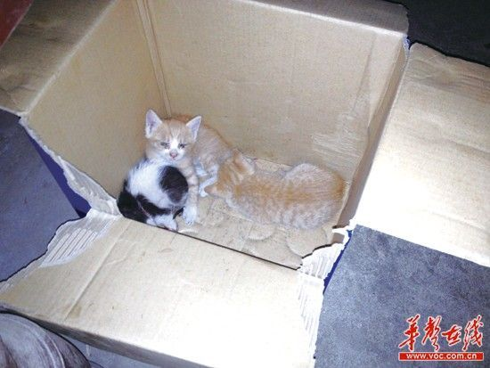 中南汽车世界一超市内,一只老鼠冲进猫窝咬死了3只猫崽,4只小猫仅剩1只(左上)。(网友供图)