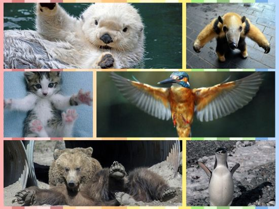 陕西有种动物叫白糜图片