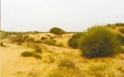 孟家湾村正在等待改造的沙漠原始生态状况。