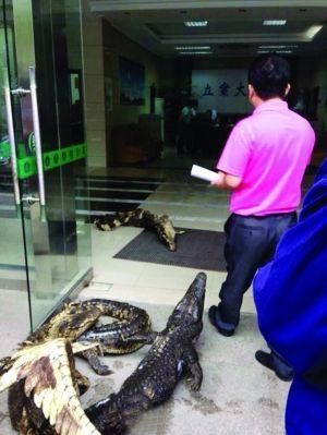 5条鳄鱼堵在扬州仲裁委办事大厅门口