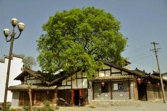 房子周围适合种什么树
