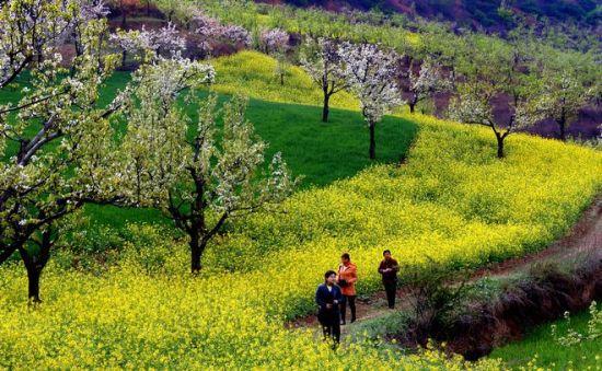 咸阳市乡村旅游发展情况图片