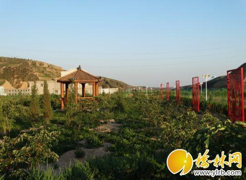 府谷田家寨镇农民发展特色产业种植牡丹蹚富路