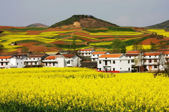 汉中各县区推出30个观花点、22条油菜花海精品旅游线路