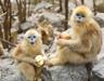 佛坪可爱猴宝宝