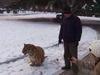 老汉公园遛老虎
