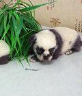 新生小狗似熊猫