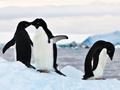 秘境南极 大美无言