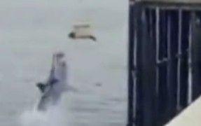 海豹被直播放生遭鲨鱼跃起吞食 记者惊呆