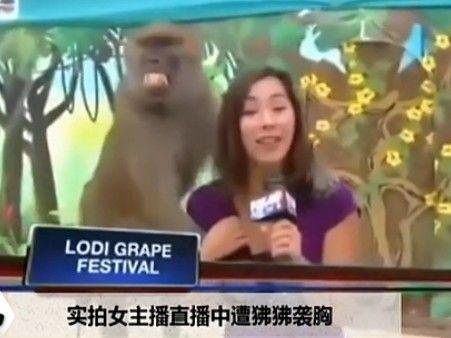 美女主播直播中遭狒狒袭胸15分钟