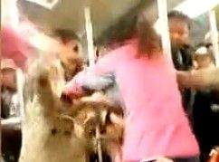 实拍两女地铁内互殴 孩子哭得凄惨