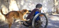 忠犬推残疾主人去摆摊 天冷帮主人暖脚