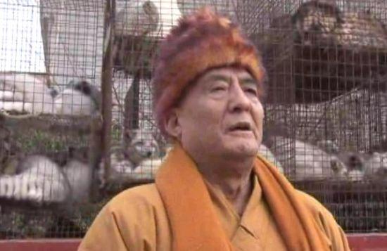 西安大阿弥陀寺放生狐狸 积善行德